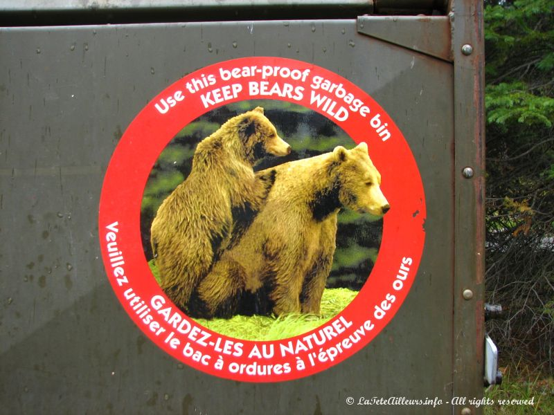Attention aux ours !!!