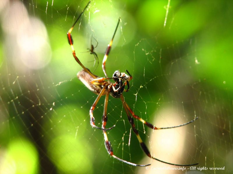 Les photos de notre voyage aux amriques tela et environs agrandissement de la photo - Araignee rouge dangereux pour l homme ...