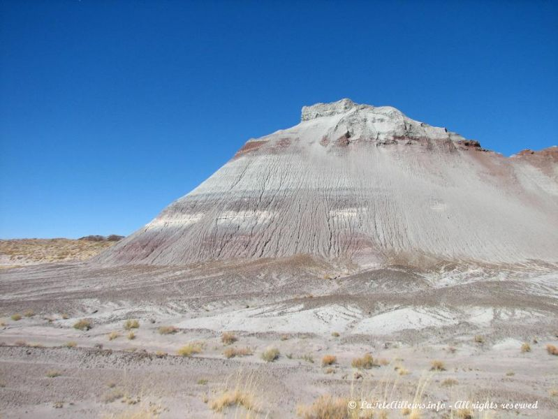 Couleurs incroyables du Petrified Forest National Park