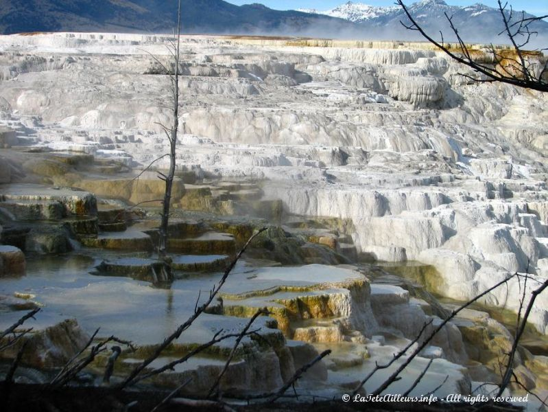 Les bassins de Mammoth Hot Springs